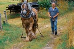 Grossvater-mit-Pferd-3